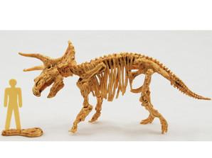 Skeleton Kits トリケラトプス
